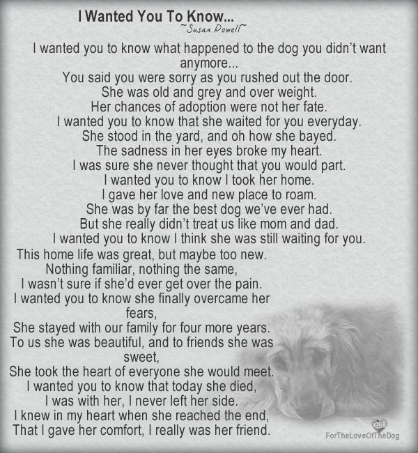 sweet poem cute animals pinterest poem dog and animal