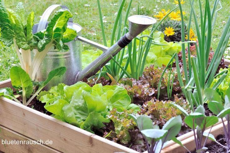 Gemüse richtig wässern