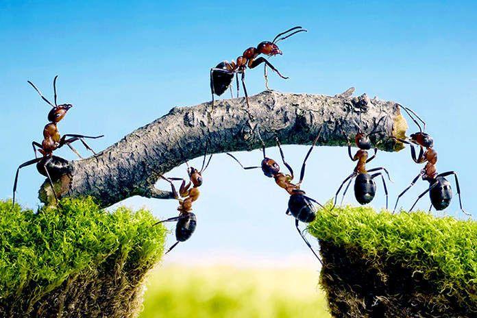 Un biólogo argentino predice el clima estudiando hormigas y acierta - https://infouno.cl/un-biologo-argentino-predice-el-clima-estudiando-hormigas-y-acierta/