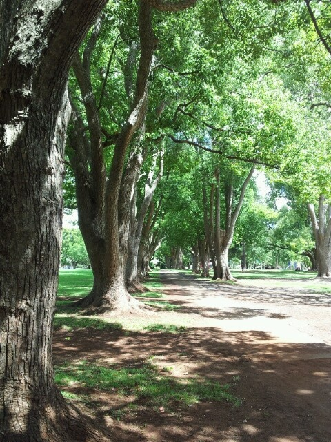 Gorgeous place 2 walk. Queens Park Toowoomba Qld Australia.