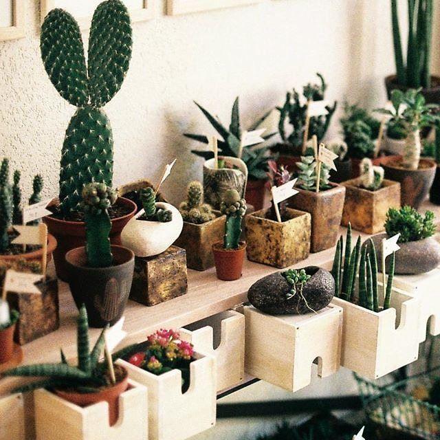 Ne #ilCottagechevorrei le piante grasse abitano mensole e cassetti…