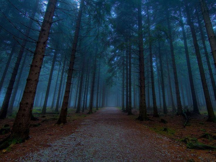 Larawan ng mga magagandang mahiwagang forest