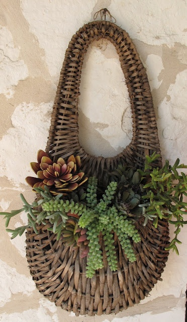 Succulent Hanging Basket. Just about everyone loves these type of plants, now display them in this special way.