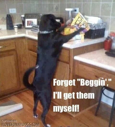 Yup this is my dog forget beggin, Ill get them myself..