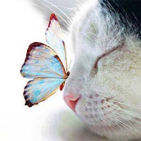 A cat and a butterfly.... so mervellous
