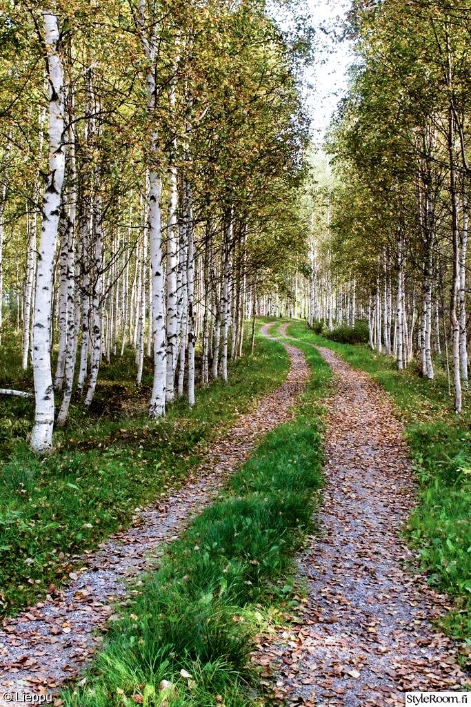 Lane through the trees (Finland) by Lieppu cr. #countryroad #path #finland