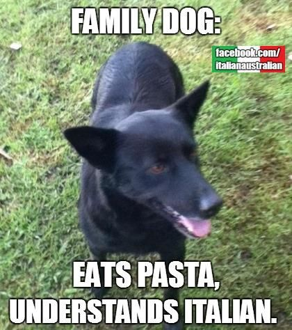 Yep, mine understand Italian commands... and always have pasta!
