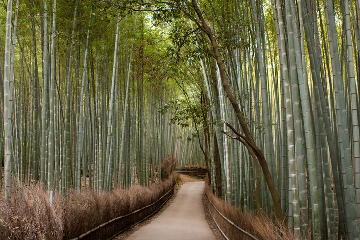 Bamboo groves of Arashiyama in Kyoto, Japan | 27 Surreal Places To Visit Before You Die