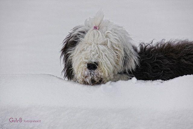 snow OES | sneeuw OES