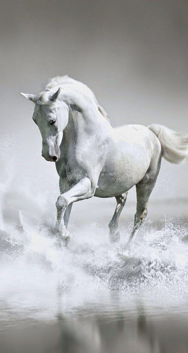 الحصان.   Horse
