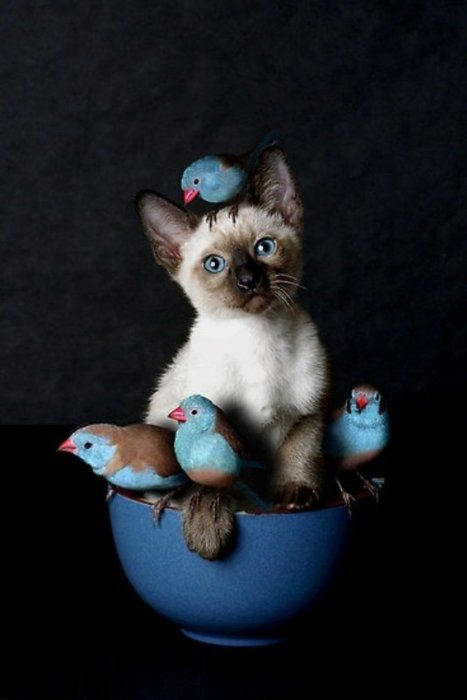 The Painted Bench - Siamese Kitten and Feathered Friends