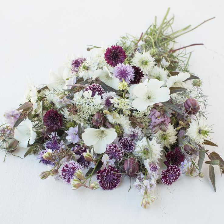 Floret Seed Collection: Midnight Mix. Annual flowers in moody rich plum and eggplant shades combine beautifully with airy white textural accents. Packaged in a beautiful re-usable gift tin, this collection will produce armloads of beautiful blooms to share and enjoy. Contains one packet each of:  Bachelor's Buttons 'Classic Magic'  Corn Cockle 'Ocean Pearls'  Larkspur 'Smokey Eyes'  Love-in-a-Mist 'Cramer's Plum'  Orach Caramel Apple Mix  Orlaya 'White Finch Lace'