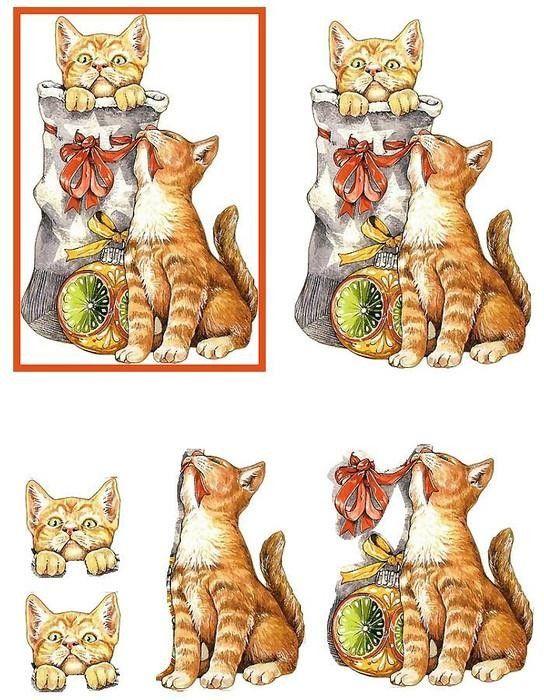 chats bottes