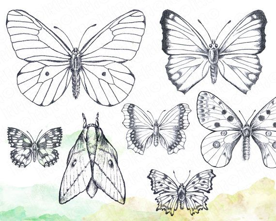 butterfly drawing easy methods how to draw butterflies - 570×456