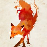 Vulpes vulpes Art Print by Robert Farkas | Society6