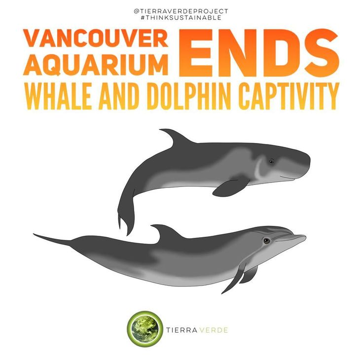 Sustainability for Vancouver and marine life!  Way to go Vancouver!  Think sustainable!  Reference: CBC News       #tierraverdeproject #environment #thinksustainable #followme #goals #photography #fashiongoals #veganlifestyle #vegan #renewableenergy #instafashion #picoftheday #recycle #inspiration #gogreen #globalwarming #sustainable #naturelovers #naturelover #zerowaste #igers #healthy #ecofriendly #healthychoices #igdaily #peace #love #climatechange #sustainable