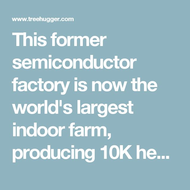 This former semiconductor factory is now the world's largest indoor farm, producing 10K heads of lettuce per day : TreeHugger