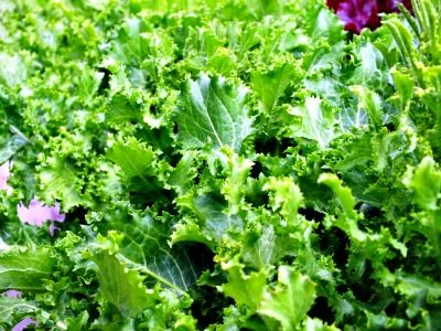 How to Plant Lettuce in Containers