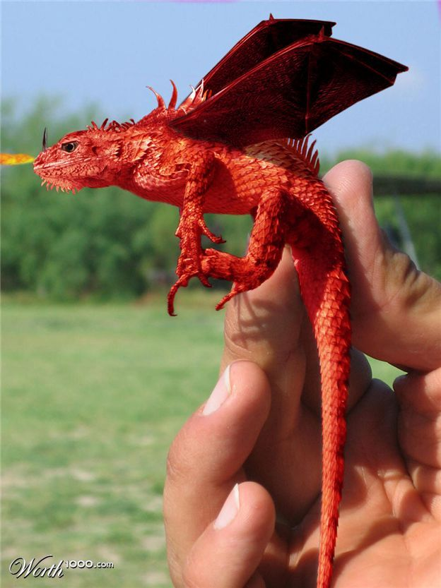 Real Fire Dragon: 8 Best Images About Dragon Red On Pinterest