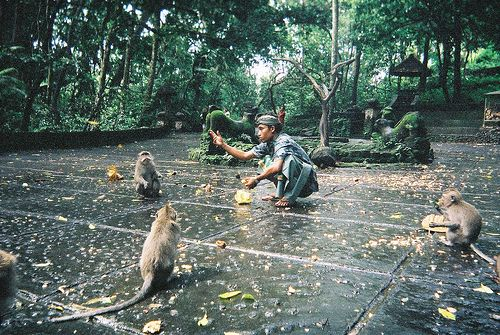 Tips if visiting Monkey Forest Ubud, Bali Indonesia
