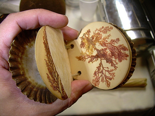 Pressed Sea Moss Album, with Scallop Shell Covers