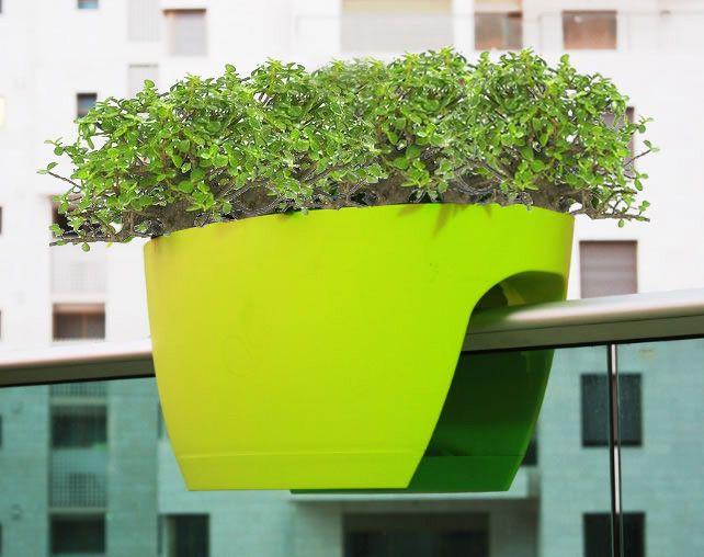 Maceta para balcon con planta millonaria (portulacaria)