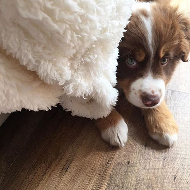 Reposting @aufeminin_com: Est-ce qu'on peut parler de cette petite bouille? 🙈❤️ ____________ 📷 @audebk_thelittleworld_ #aufemininloves #regram #chien #chiot #dog #cute #cuteness #love #happy #smile #liveauthentic