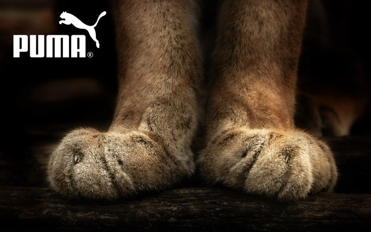 Download hd wallpapers of 169736-Puma, Paws, Pumas, Animals. Free download High Quality and Widescreen Resolutions Desktop Background Images.