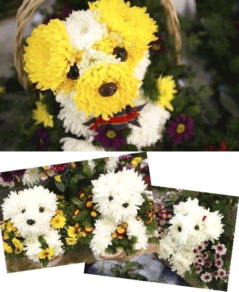 Puppy flower arrangements.