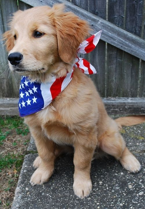 Proudly wearing the colors of red,white & blue