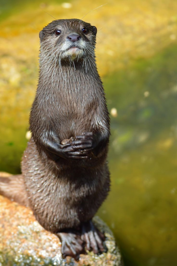 Otter by Sarah Michel on 500px                                                                                                                                                                                 More