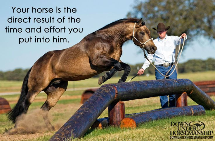 So many riders dont spend enough time working their horses inbtwn shows, and it does reflect...