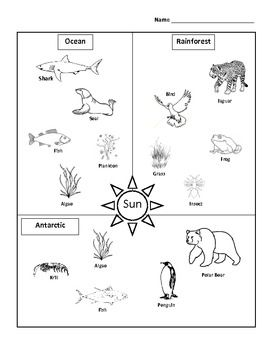 Scottish Seabird Centre - Ocean food web worksheet by Grieveson ...