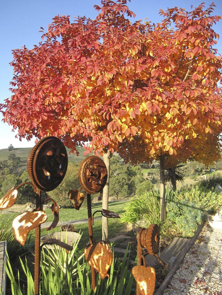 Ash Glory Mica Grange in Autumn