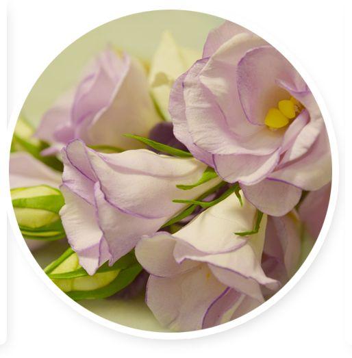 Цветы из фоамирана :: Основной сайт