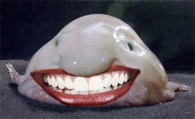 Funny blobfish danny likes pinterest blobfish for Ugly fish blob