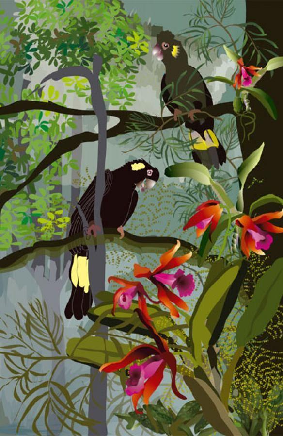 Australian Black Cockatoo | Max Fulcher