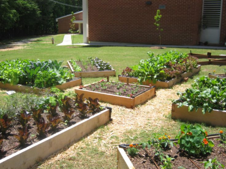43 best images about School Garden Ideas on Pinterest