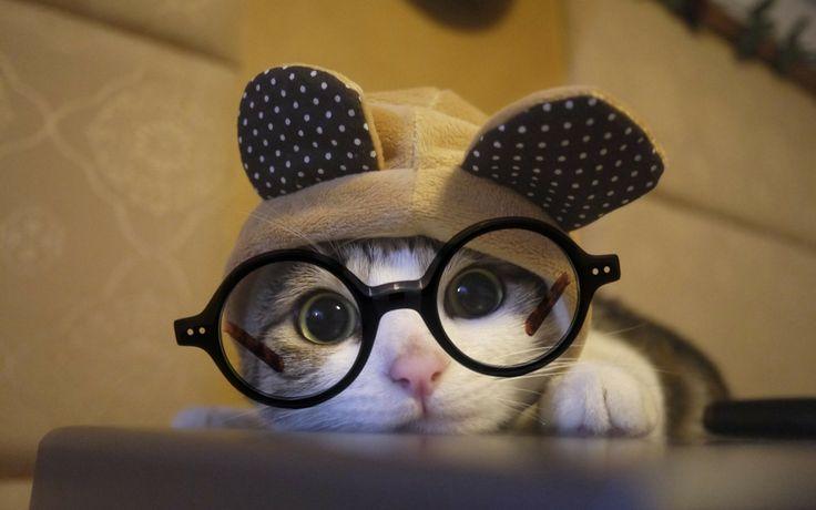 So Cute Cat Wear Ozealglasses #eyewear #eyeglasses Http