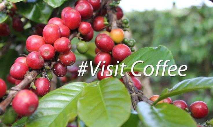 Visit Coffee [kebun Kopi Rakyat]