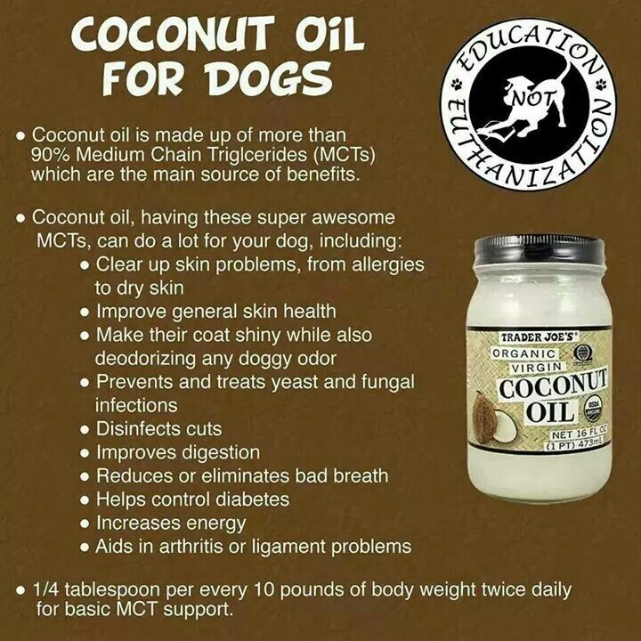 Coconut oil for dogs helps treat skin irritants doggy