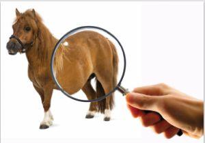 Med dette testværktøj kan du tage billeder af din hest og sende dem direkte til en af de kampagne-registrerede dyrlæger.