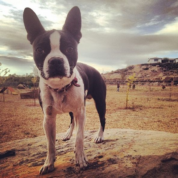 Day out at City of Gallup Dog Park - Gallup, NM - Angus Off-Leash #dogs #puppies #cutedogs #dogparks #smalldogs #gallup #newmexico #angusoffleash