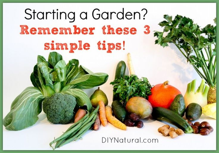 Starting A Garden - 3 Important Tips To Consider  Before Starting a Garden this Year > your time/space/skill, what you'll actually eat, and what to do with extras!