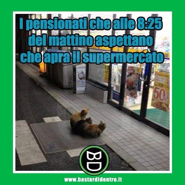 Pensionati al #supermercato #bastardidentro #gatti #ipnoticamentebastardidentro www.bastardidentro.it