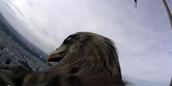ワシビジョンがすご過ぎ!オジロワシに設置したカメラから見たパリ観光ツアー