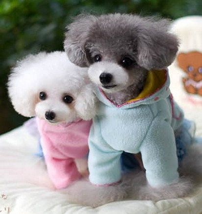 Fashion cherry lace pet coat ,pet clothes, dog clothes, Teddy clothes