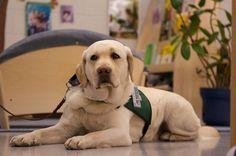 Terapia asistida por animales: ¡cuánto nos ayudan!