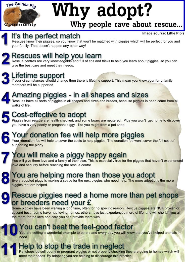 why adopt from an animal shelter essay Why adopt rather than buy when you adopt, especially from a rescue group, you know what you are getting because the group has a history on the animal the rescue group will also help you through the familiarization period because they are invested in providing a good home for that animal.