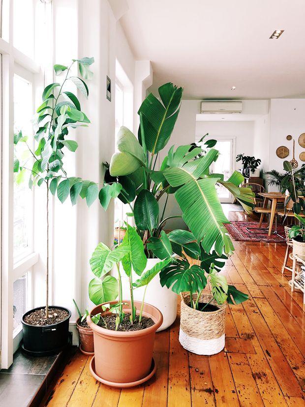 Pad Peek Ron Goh Indoor Garden Plants Indoor Plants